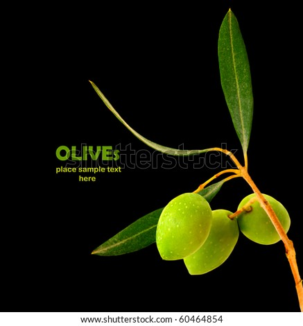 Fresh green olive branch isolated on black background