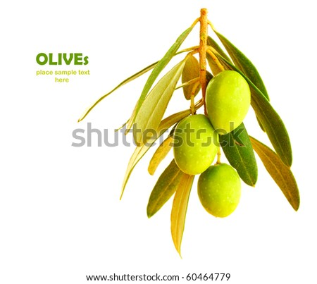 Fresh green olive branch isolated on white background