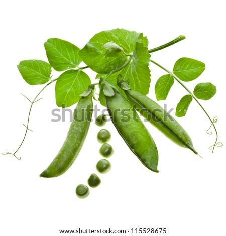 Fresh green pea in the pod close up decor isolated on white background