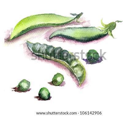 Fresh green peas, watercolor illustration