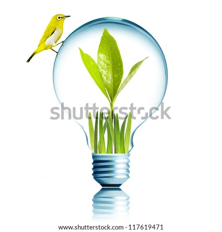Fresh green plant grow inside with green grass and water droplet. Yellow bird on top of the light bulb. Concept for environmental conservation