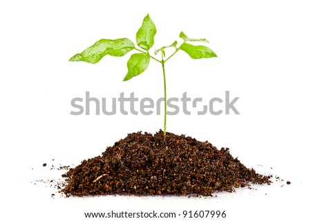fresh green plant  in a mound of dirt