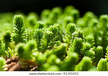 Fresh green plant ready to grow