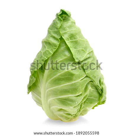 fresh green pointed cabbage isolated on white background Photo stock ©