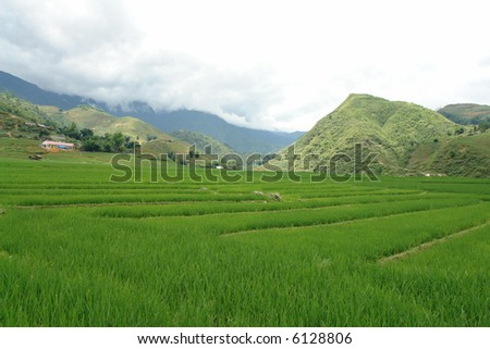 Fresh green rice paddies in the mountains of Vietnam