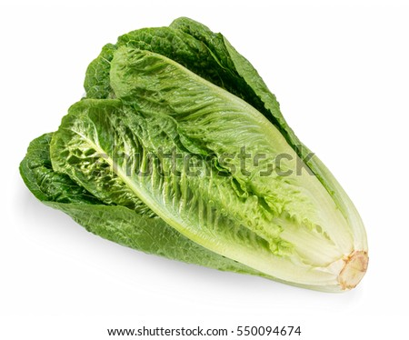 Fresh green Romaine  Lettuce (Lactuca sativa), isolated on the white background with light shadow Photo stock ©