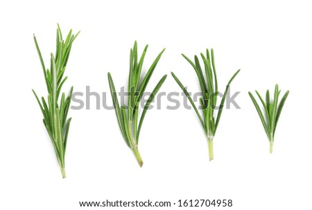 Fresh green rosemary isolated on white, top view. Aromatic herb