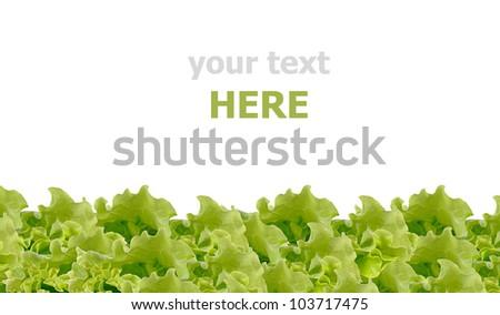 Fresh green salad isolated on white background