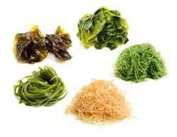 fresh green seaweed on white background