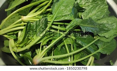 Fresh green spinach closeup in water Stok fotoğraf ©