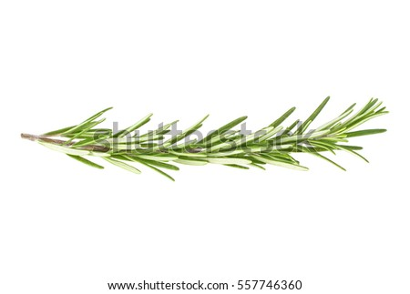 Fresh green sprig of rosemary isolated on a white background #557746360