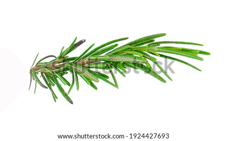 Fresh green sprigs of rosemary isolated on a white background Stock photo ©