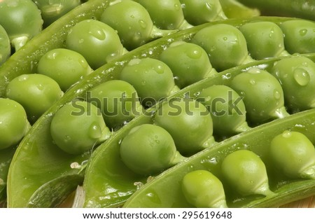 Fresh green sugar snap peas close up open pod with water droplet