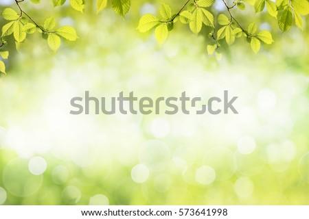 fresh green tree leaves  frame. ...
