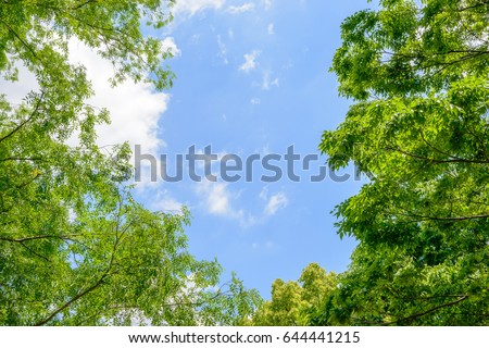 Fresh green trees and blue sky and clouds #644441215
