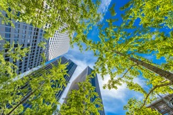 Fresh green trees and urban buildings