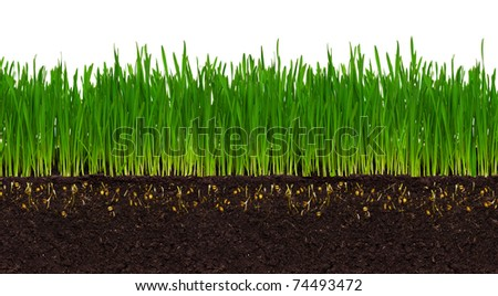 Fresh green wheat grass isolated on white background #74493472