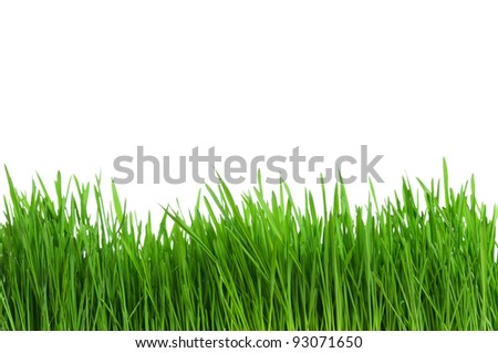 Fresh green wheat grass isolated on white background #93071650