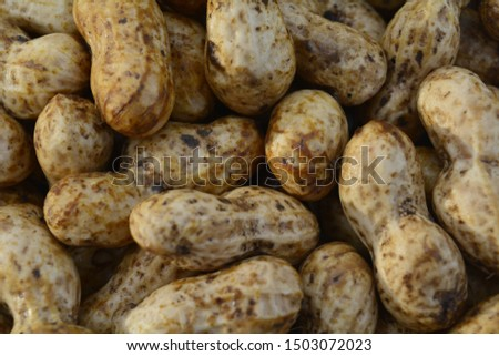 fresh groundnuts peanuts in shell