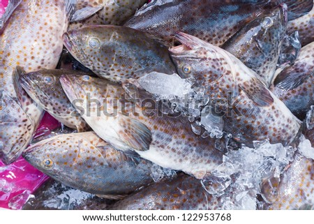 Fresh Grouper Fish (Cromileptes altivelis) in the street market of Thailand