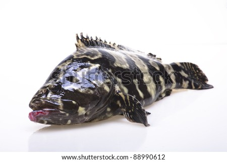 Fresh Grouper on white background