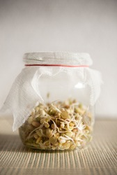 Fresh growing sprouts mix in glass jar with bandage standing on mat, domestic horticulture of healthy plants and seeds, detail of jar in vertical orientation, nobody.