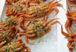 Fresh hair crab or horse hair crab or tsugani on ice in market with selective focus