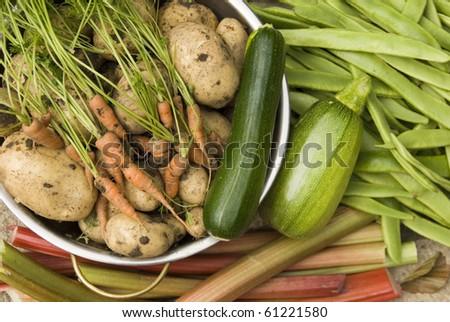 Fresh Harvest of Garden Grown Organic Vegetables, Grown Your Own, Sheffield, England