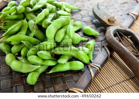 Fresh harvested edamame soybeans on bamboo tray and pruning scissors