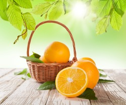 Fresh harvested oranges in basket