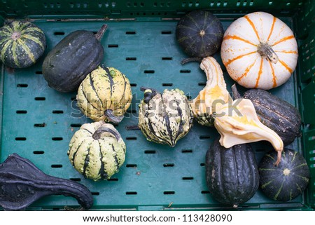 Fresh healthy bio pumpkin on German farmer agricultural market
