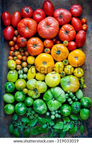 Fresh heirloom tomatoes background, organic produce at a Farmer\'s market. Tomatoes rainbow.