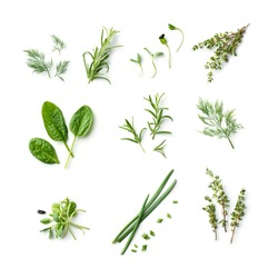 fresh herb and spices isolated on white background, top view