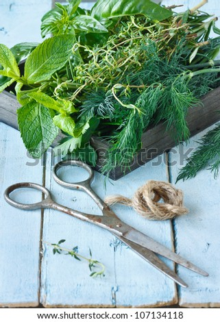 Fresh herbs and old scissors on a blue  board.