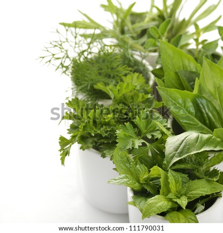 Fresh Herbs Assortment In White Cups,Close Up