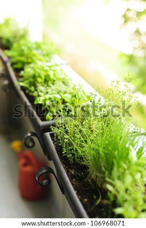 Fresh herbs growing in window boxes on bright balcony