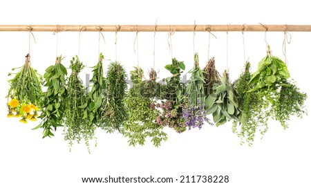 fresh herbs hanging isolated on white background. basil, rosemary, sage, thyme, mint, oregano, marjoram, savory, lavender, dandelion #211738228