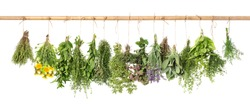 Fresh herbs hanging isolated on white background. Basil, rosemary, sage, thyme, mint, oregano, dill, marjoram, savory, lavender, dandelion.