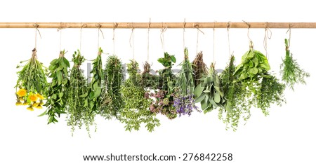 Fresh herbs hanging isolated on white background. Basil, rosemary, sage, thyme, mint, oregano, dill, marjoram, savory, lavender, dandelion. #276842258