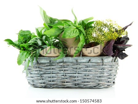 Fresh herbs in basket, isolated on white
