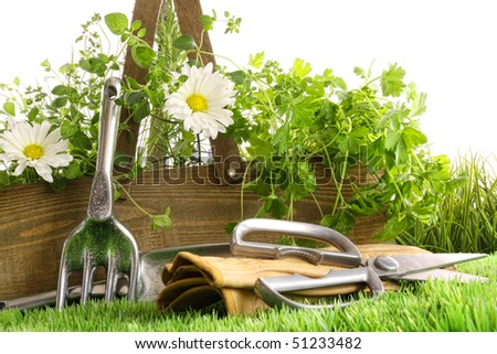 Fresh herbs in wooden box with garden tools