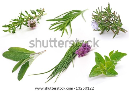 fresh herbs, isolated on white background