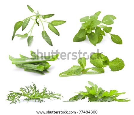 Fresh herbs isolated on white background