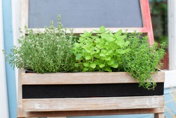 Fresh herbs on balcony garden in pots. Mixed Green fresh aromatic herbs - melissa, mint, thyme, basil, parsley in pots. Kitchen herb plants in wooden box in home. Aromatic spices Growing in home.