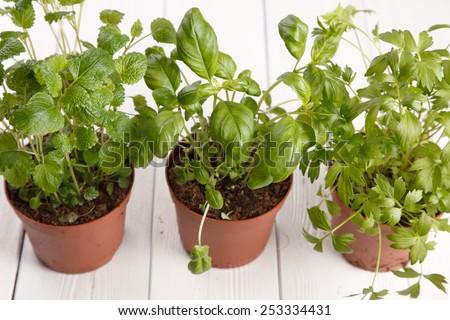 Fresh herbs on wooden kitchen table