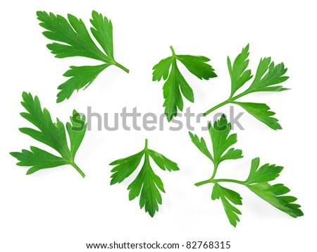 Fresh herbs parsley