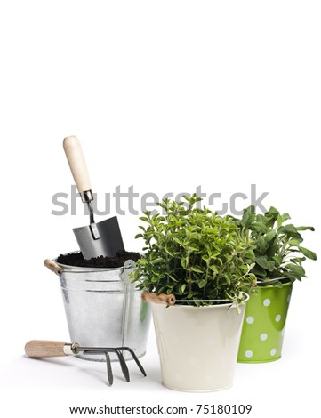 Fresh herbs with gardening tools isolated on white