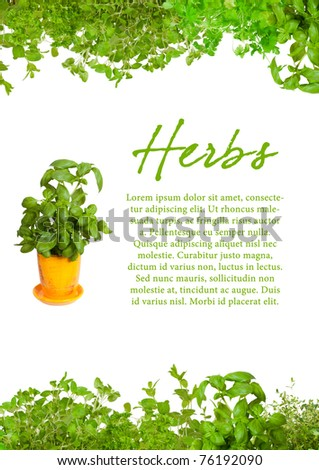 Fresh herbs with sample text. Mint, basil, thyme,  parsley  oregano and coriander