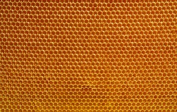 fresh honey in cells, honeycomb natural background
