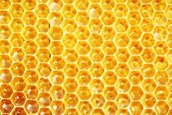 fresh honey in comb